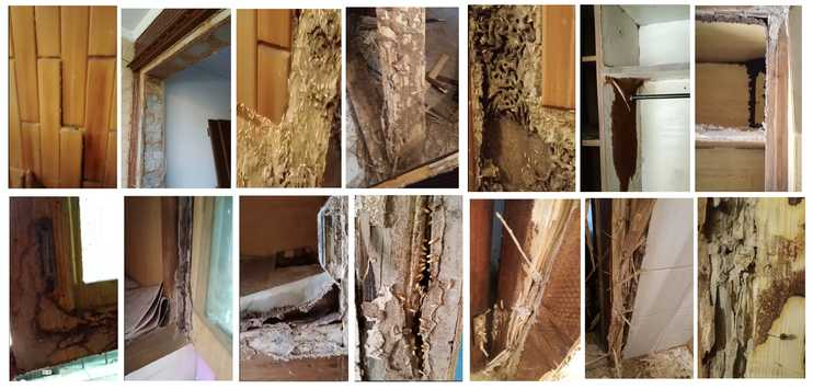 Termite Damages by Star Pest Control